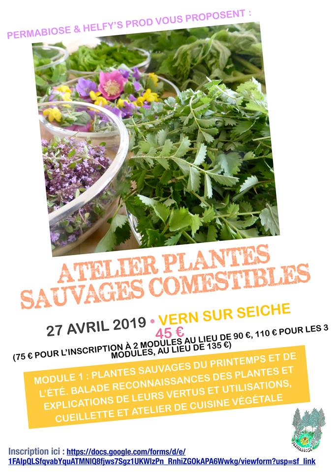 Plantes sauvages comestibles 02/02